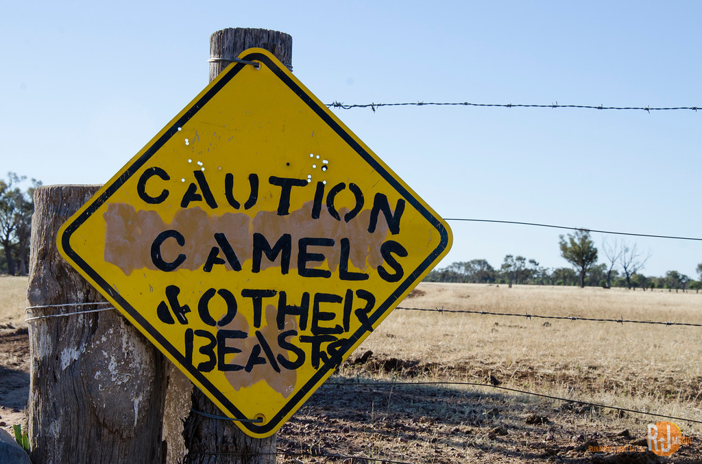 Caution: Camels and Other Beasts