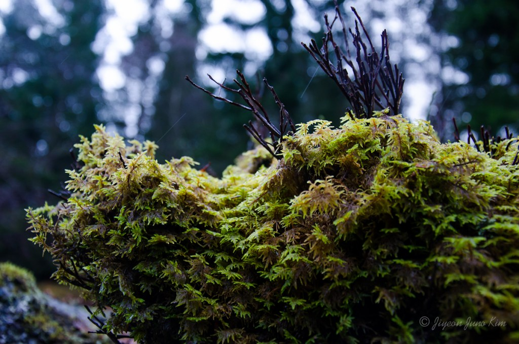 Mosses and small branches on the stone wall