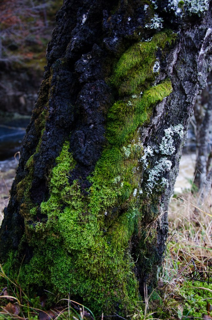 Mosses on the tree
