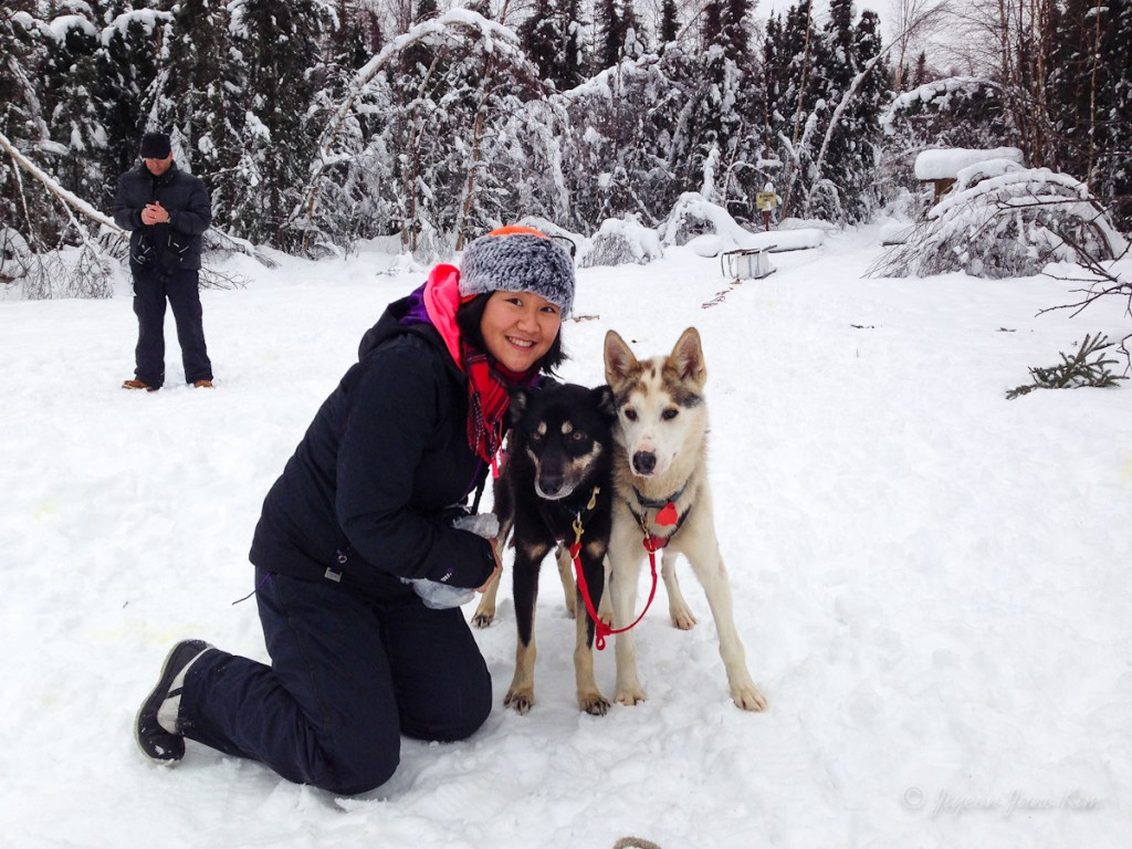 with Alaskan Huskies