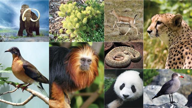 Biodiversity The Scientist Magaziner