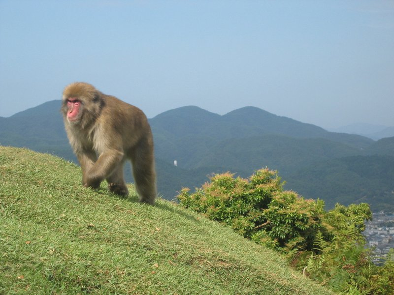 Japan Trip Blog Winter Monkey Mountain Japan Travellerspoint Travel Photography