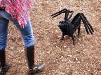 crazylinkz: weird dog costumes