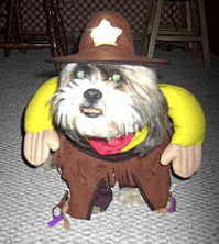 Funny and Stupid Ideas: Funny dog costumes