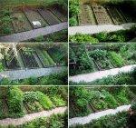Home Ve Able Garden Design