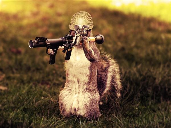 Photo-manipulation Squirrel
