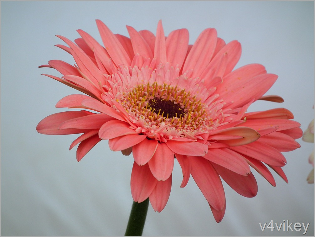 Beautiful Wallpapers 3d Animation Happiness Is The Natural Duty Of Flower 171 Wallpaper Tadka