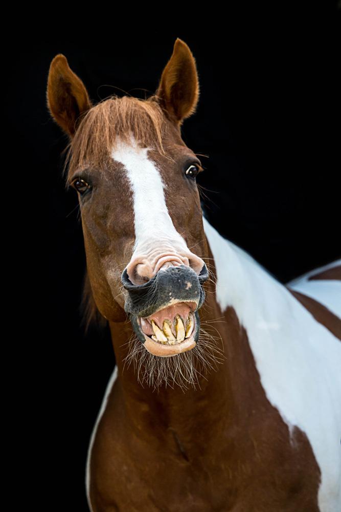 Pferde07