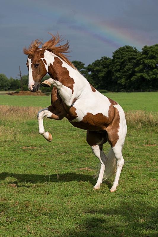 Pferde08
