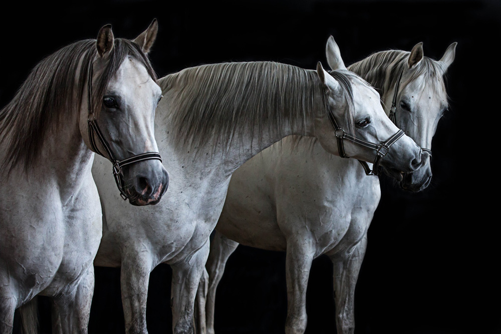 Pferde17