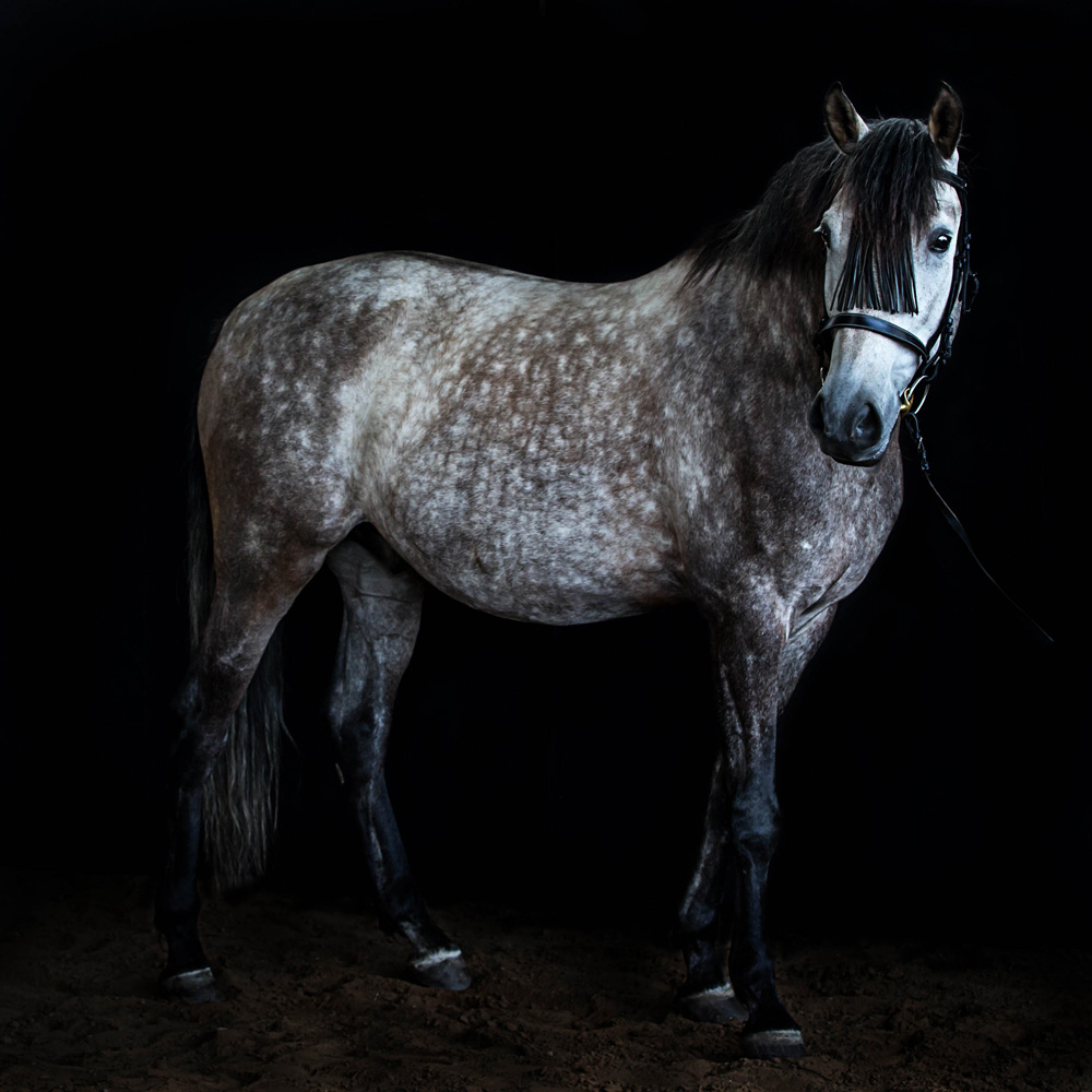Pferde19