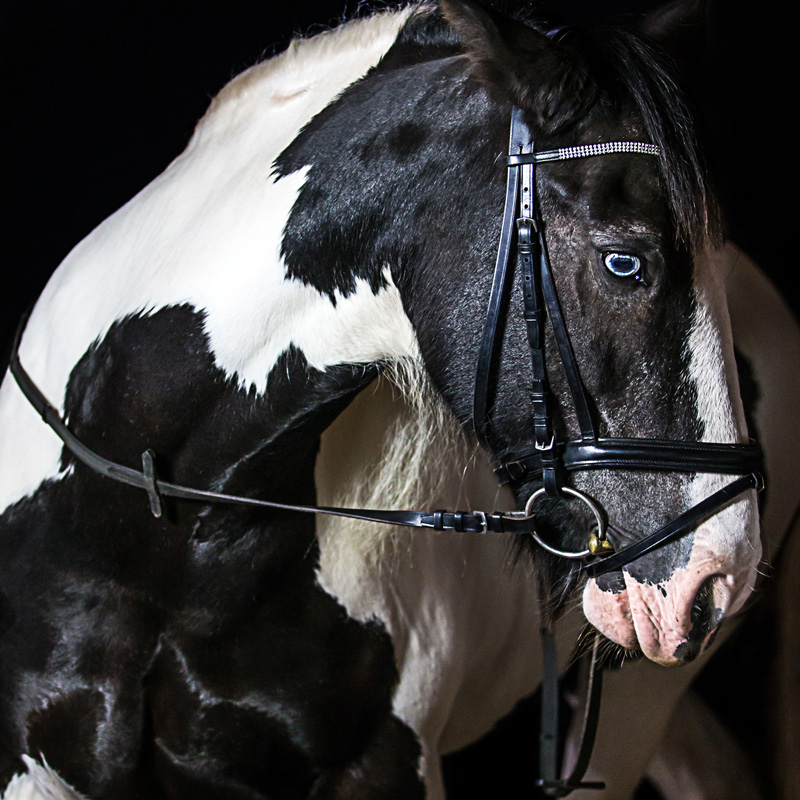 Pferde23