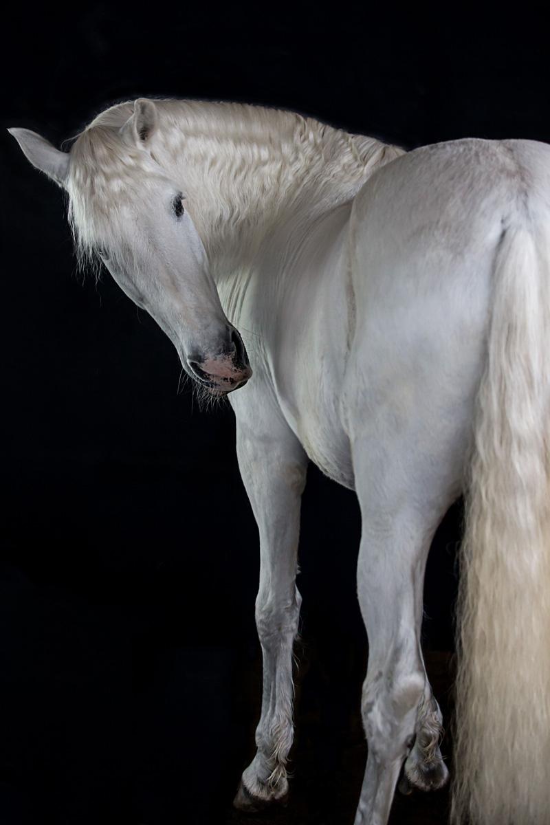 Pferde36