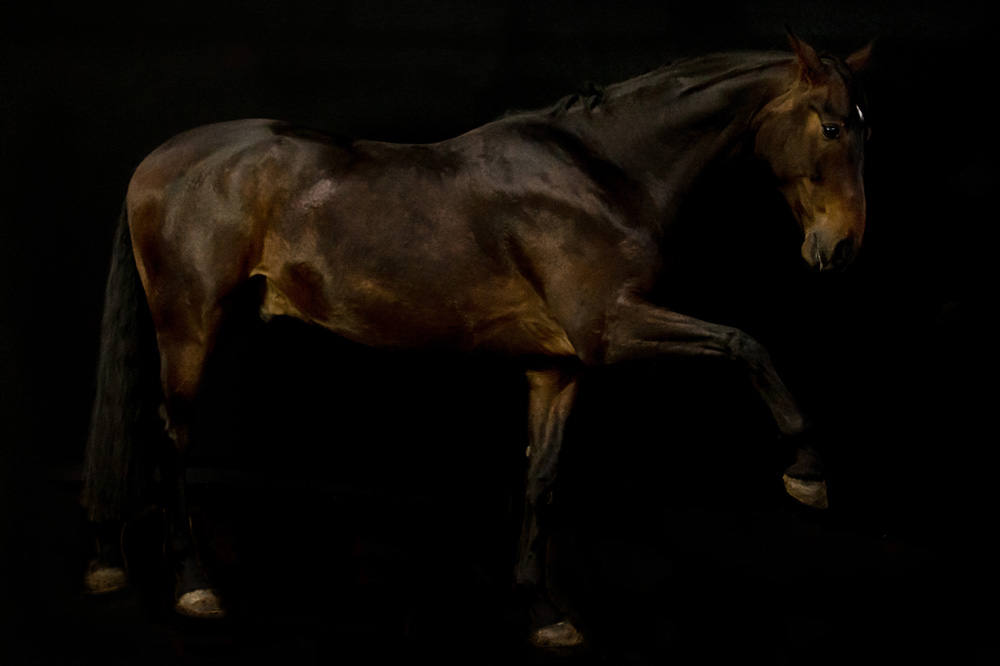 Pferde40