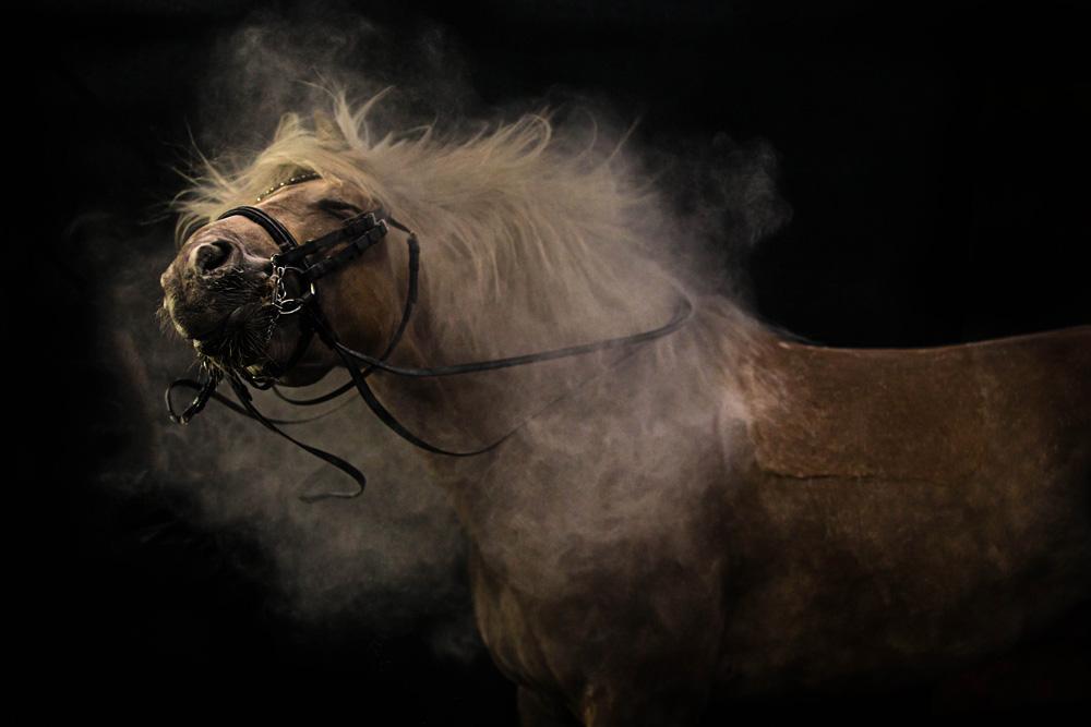 Pferde46