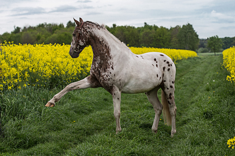 Pferde48