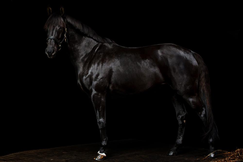 Pferde52