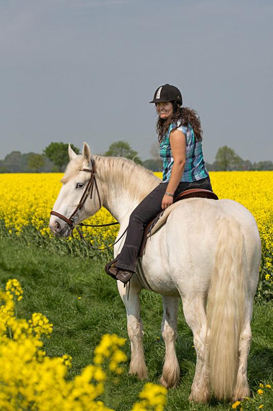 Pferde54