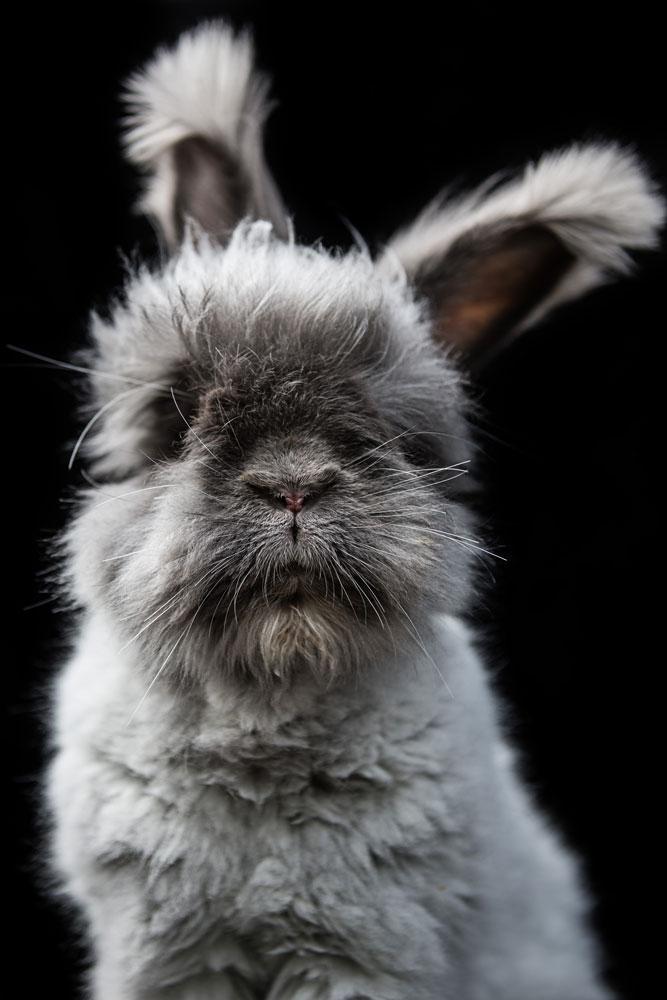 Kaninchen4