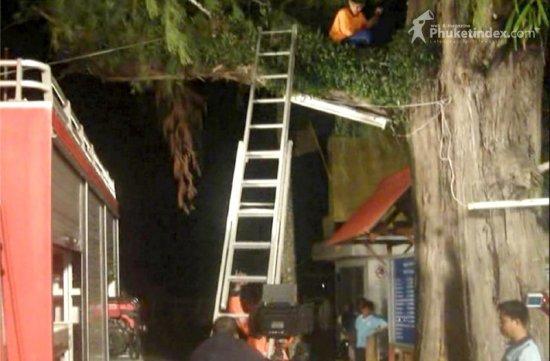 saving student up tree