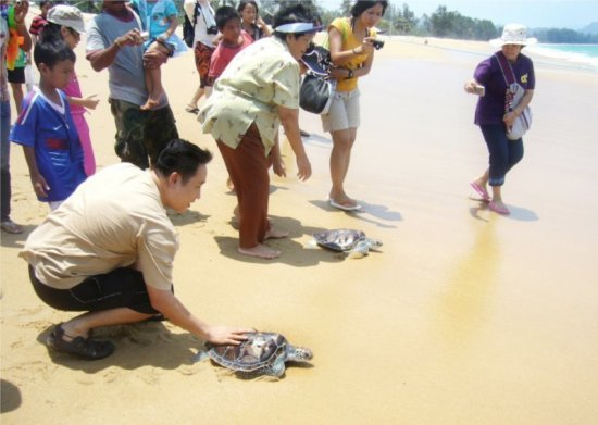 Tourists and Mai Khao villagers got together to release turtle back to the sea