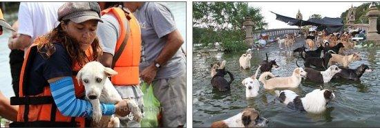 The Evacuation of Dog Island...