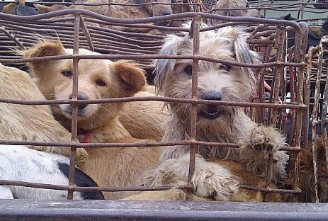 Please Help Save Dogs Like These!
