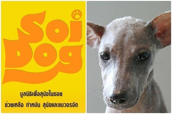 Soi Dog Foundation - Read about Cathys Challenge...