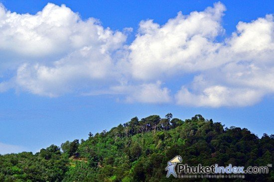 Phuket forestation project for Queen Sirikit's 80th Birthday