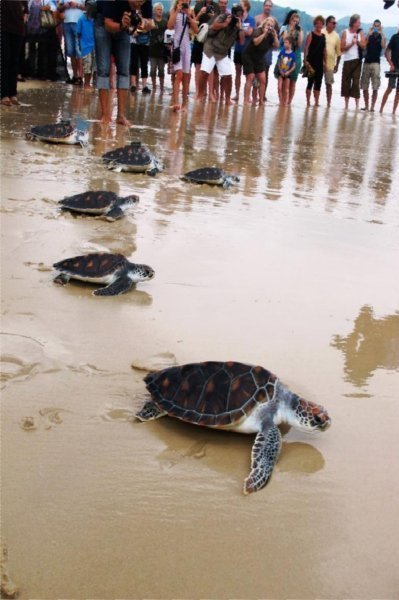 Laguna Phuket's Sunset Sea Turtle Release
