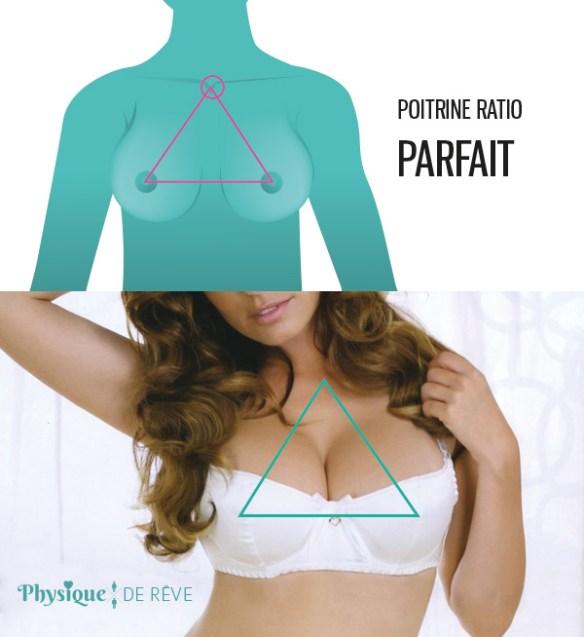 seins-parfait-equilibre-ratio-taille