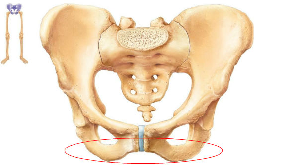 What Causes Pain in the Upper Thigh and Groin Area? Bad News