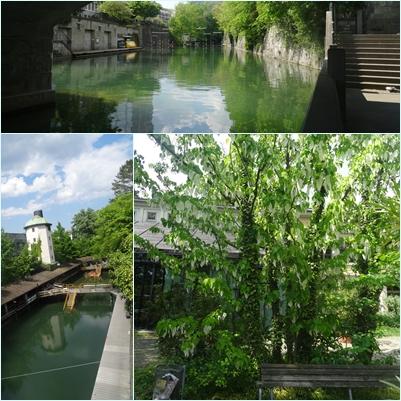 Baum Grün Weiss