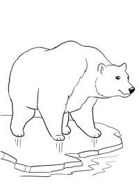 Orso Polare Immagini Da Colorare Disegno Da Colorare Orso Polare