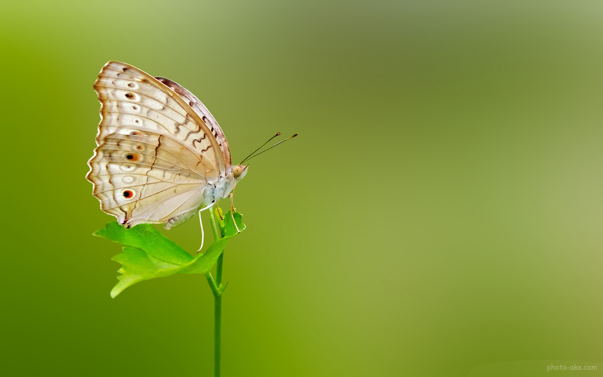 Fall Of The Leafe Wallpaper والپیپر های زیبای پروانه ها Butterfly Green Wallpaper