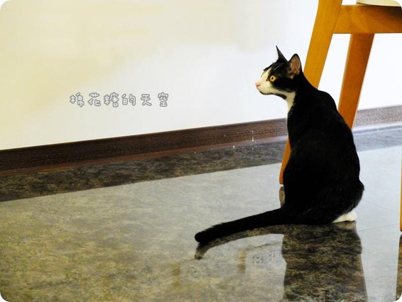 00店貓3-1.JPG