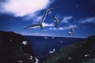 遠在北海道的海角天涯…天賣島 燒尻島