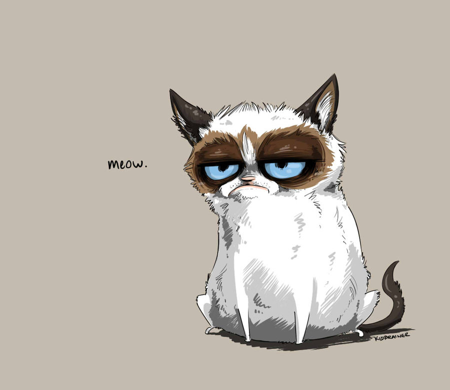 Cute Kitties Hd Wallpapers Grumpy Cat Красивые картинки