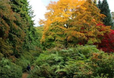 Autumn at National Trust Winkworth Arboretum