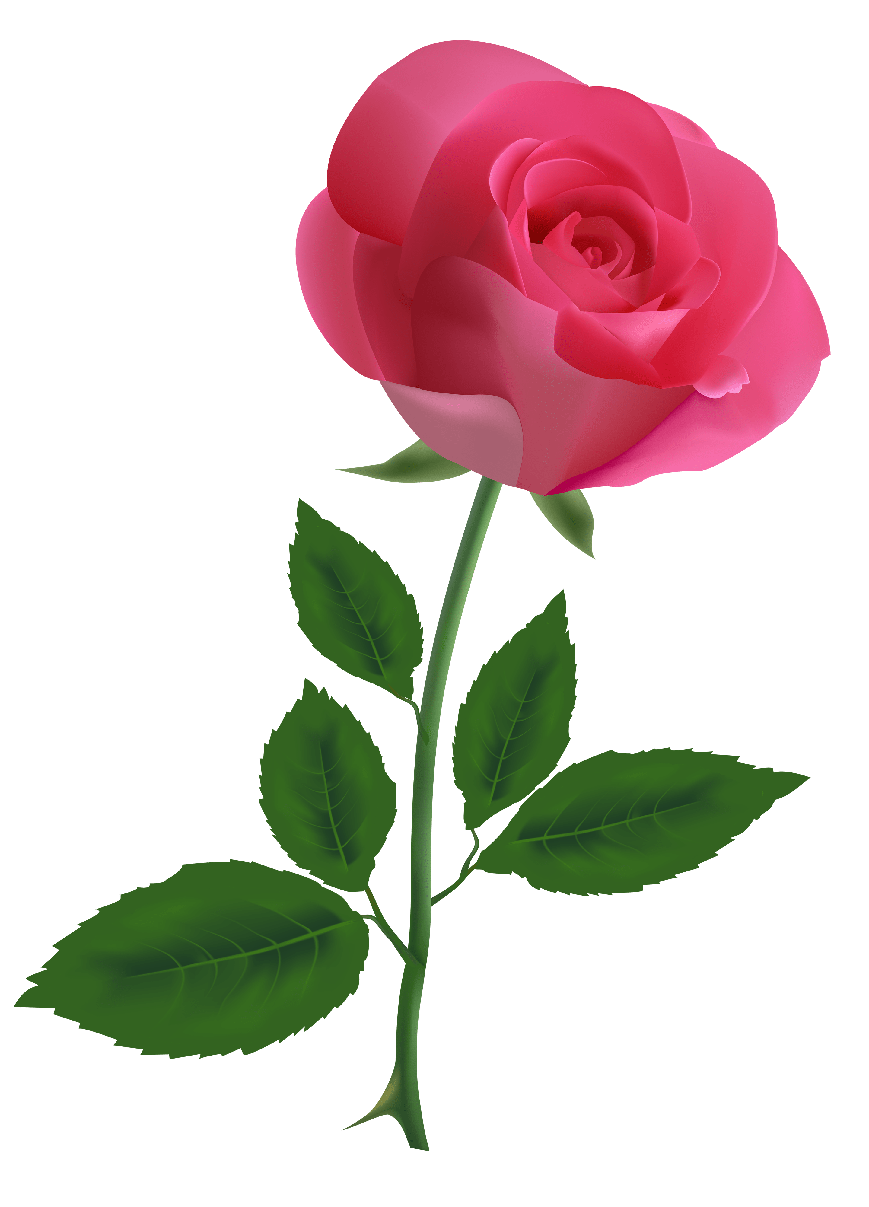Pfingstrosen Clipart Hoontoidly Single Pink Rose Clip Art Images