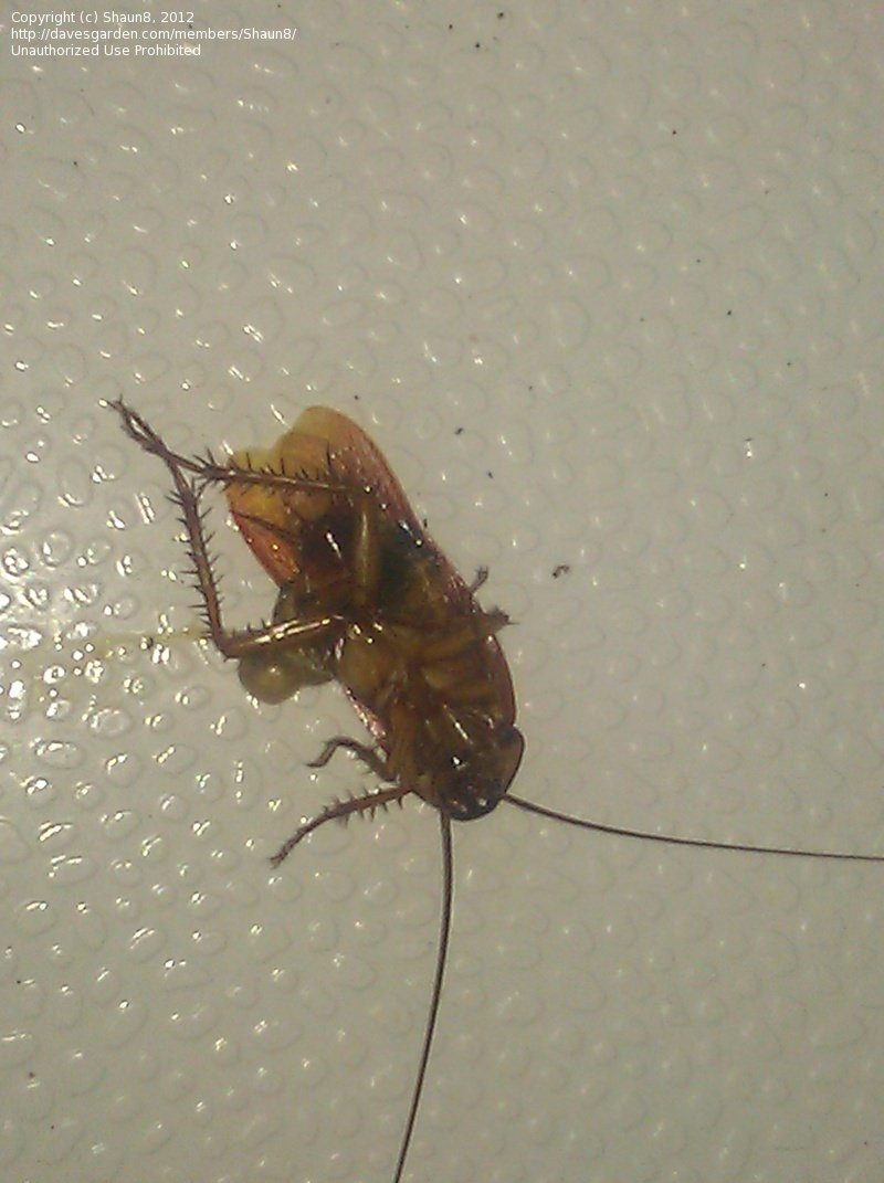 Bathroom Bugs Insect And Spider Identification Very Tiny 6 Leg Bugs In Bathroom