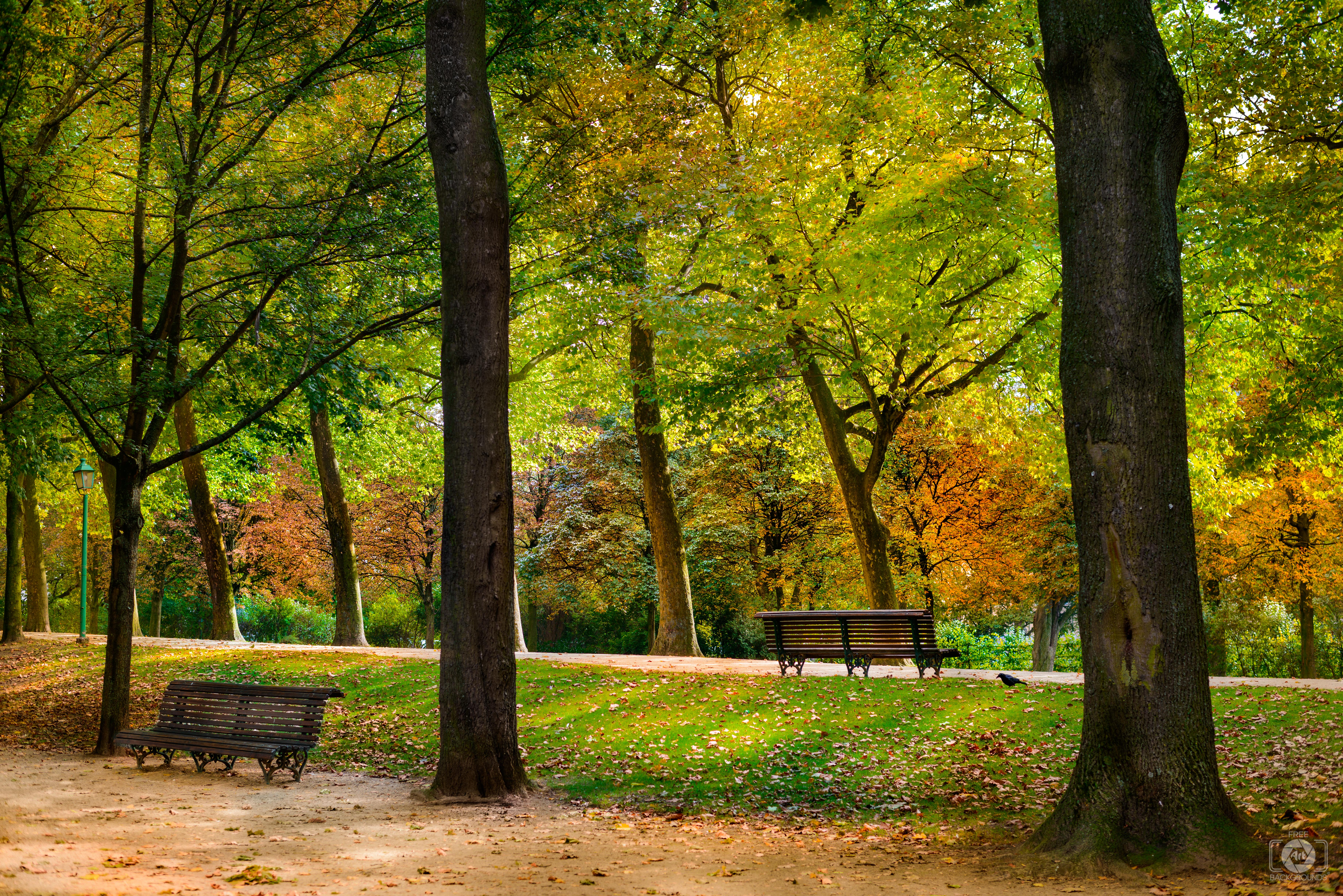 High Resolution Wallpaper Fall Leaves Autumn In The Park Background Freeartbackgrounds Com