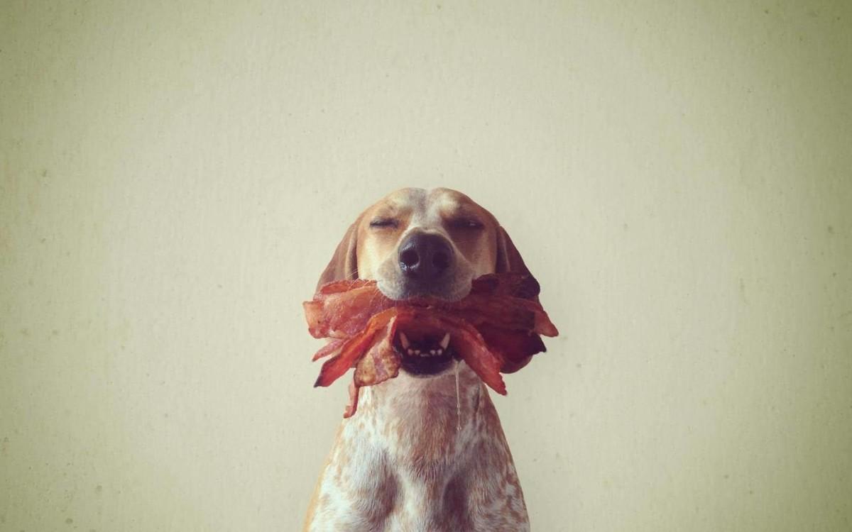Cute Husky Wallpaper Hd 65 Very Cute Dog Wallpaper Images Pics Photos Snaps