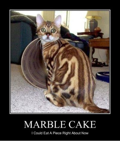 Fall Of Quotations Wallpapers Cake Memes Marble Cake I Could Eat A Piece Right About Now