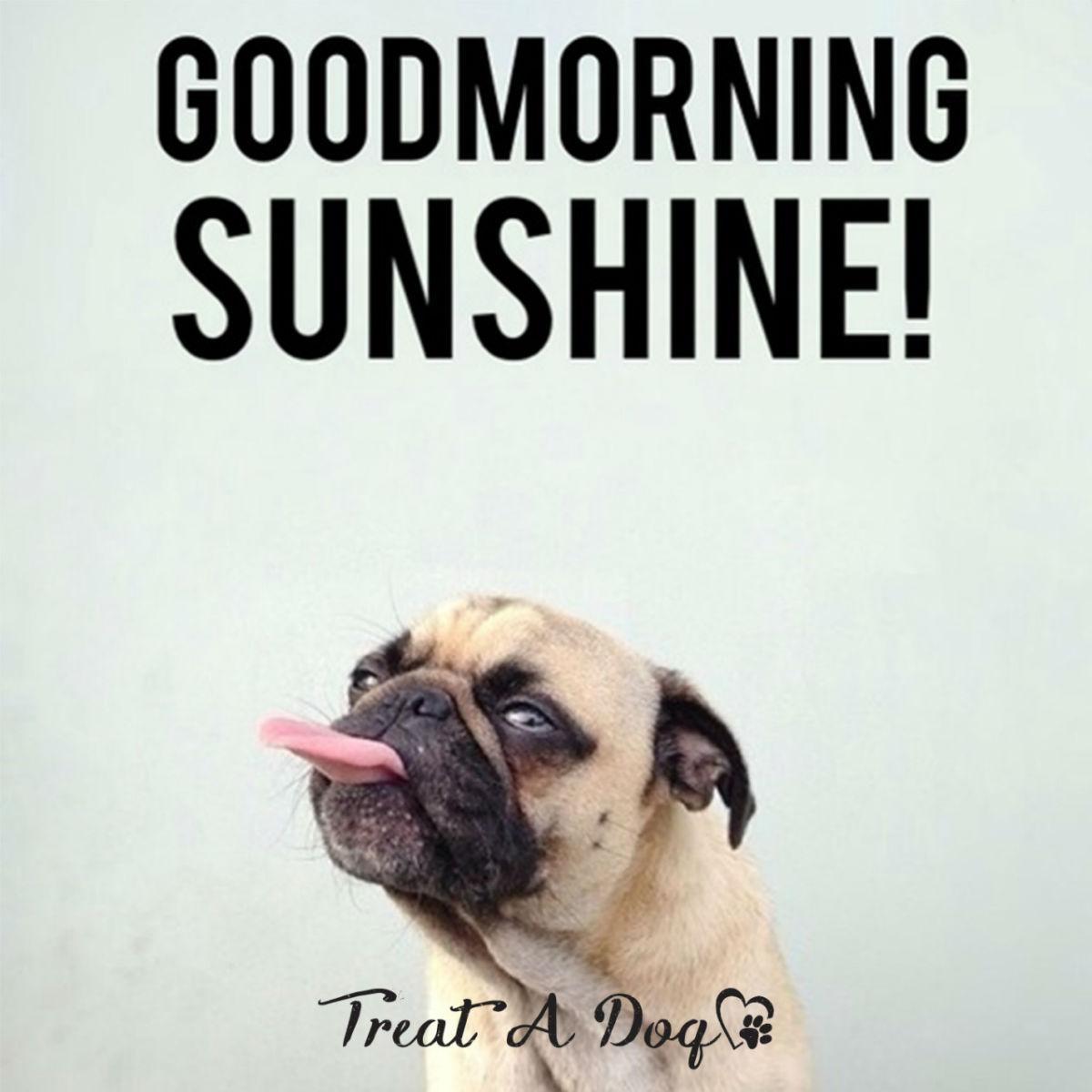 Fall Vibes Wallpaper Good Morning Memes Good Morning Sunshine Picsmine