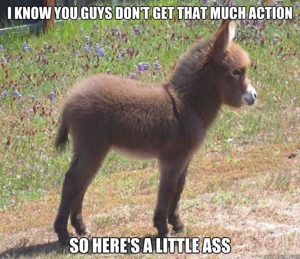 Birthday Wallpaper With Quotes Donkey Meme I Know You Guys Don T Get That Much Action