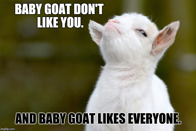 Harry Styles Fall Wallpaper Goat Meme Baby Goat Don T Like You And Baby Picsmine