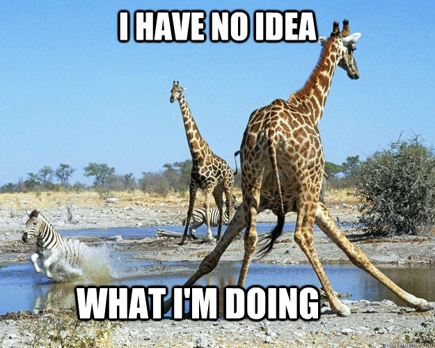 Fall Vibes Wallpaper I Have No Idea What Im Doing Giraffe Meme Picsmine
