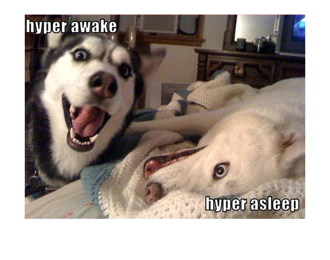 Pitbulls Fall Wallpaper 31 Very Funny Dog Memes Graphics Images Amp Photos Picsmine