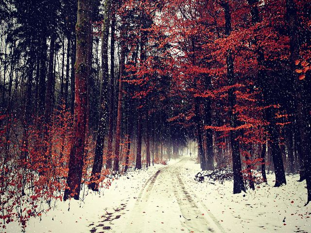 Free Animated Snow Fall Wallpaper An Exciting Collection Of Tumblr Photography